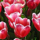 Pink Tulips by Evelyn Hood