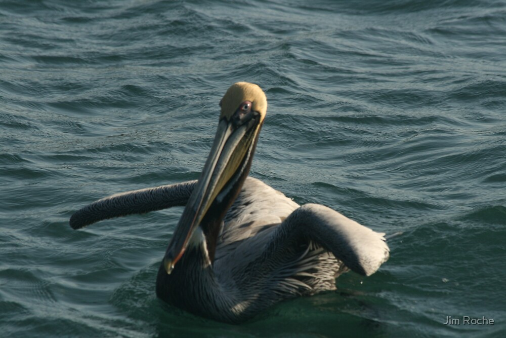 Pelican Afloat by Jim Roche