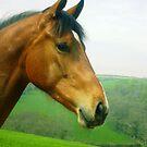Horse Head Shot by amandafriend