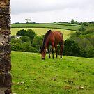 Horse Grazing by amandafriend