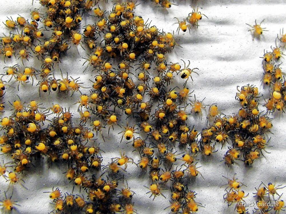 A Flies Worst Enemy by Chuck Gardner