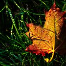 Change of Season by Anna Legault