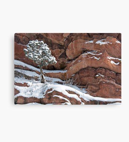 Tree at Red Rocks Canvas Print