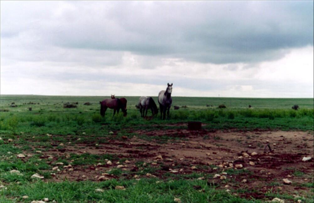 Bill Rice Ranch by nucklheadsports