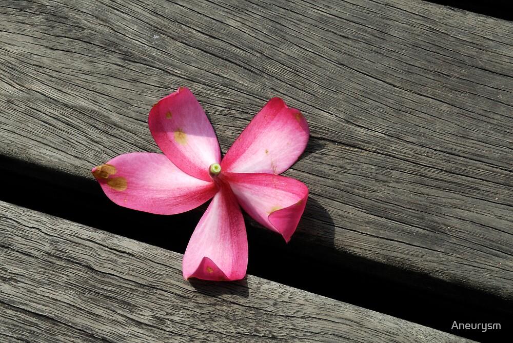 Death of a flower by Aneurysm