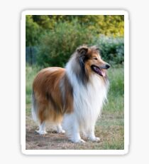 rough collie full fifth Sticker