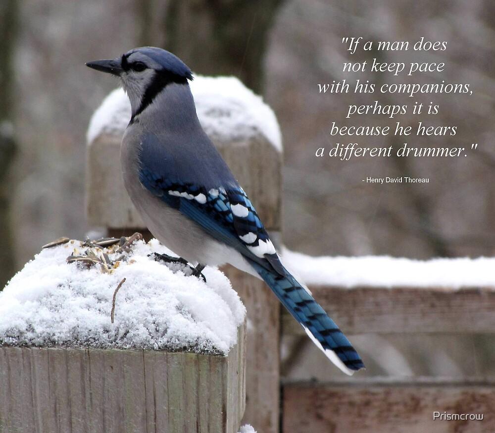 November (Backyard Friends) by Prismcrow
