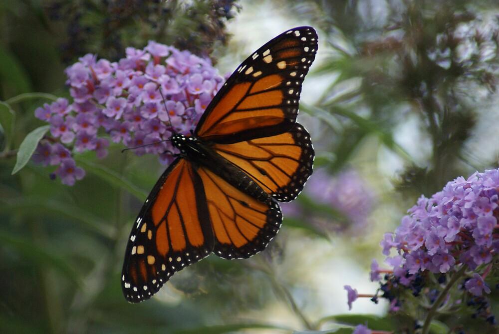 Monarch Butterfly by Cassy Greenawalt