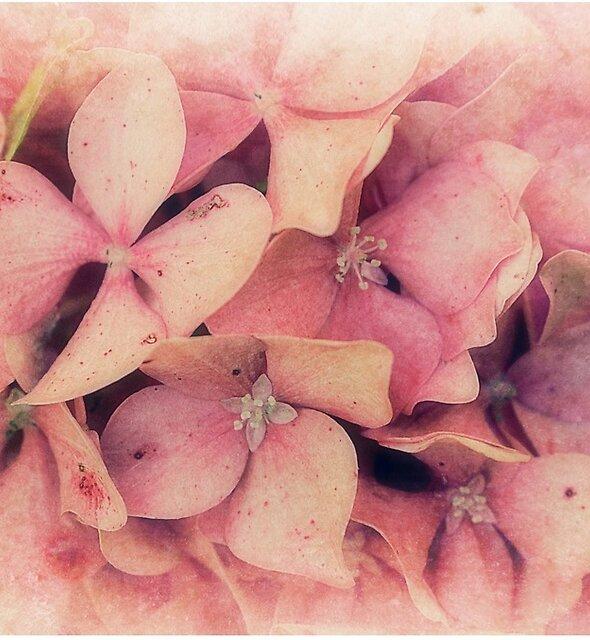 Pink Memories Of Spring by Christine Lake