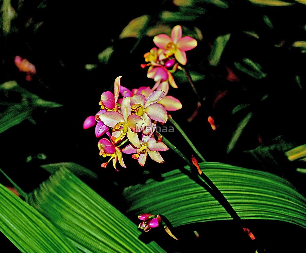 Winter Ground Orchids by Memaa