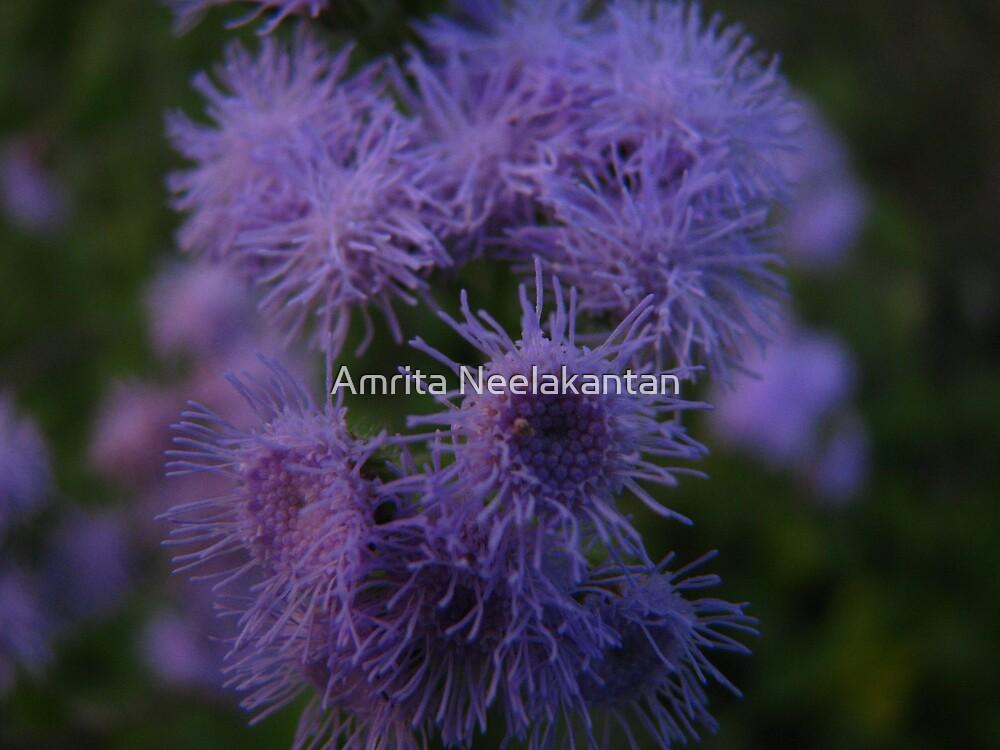 purple flower by Amrita Neelakantan