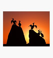 Bird sculptures, Morecambe Photographic Print