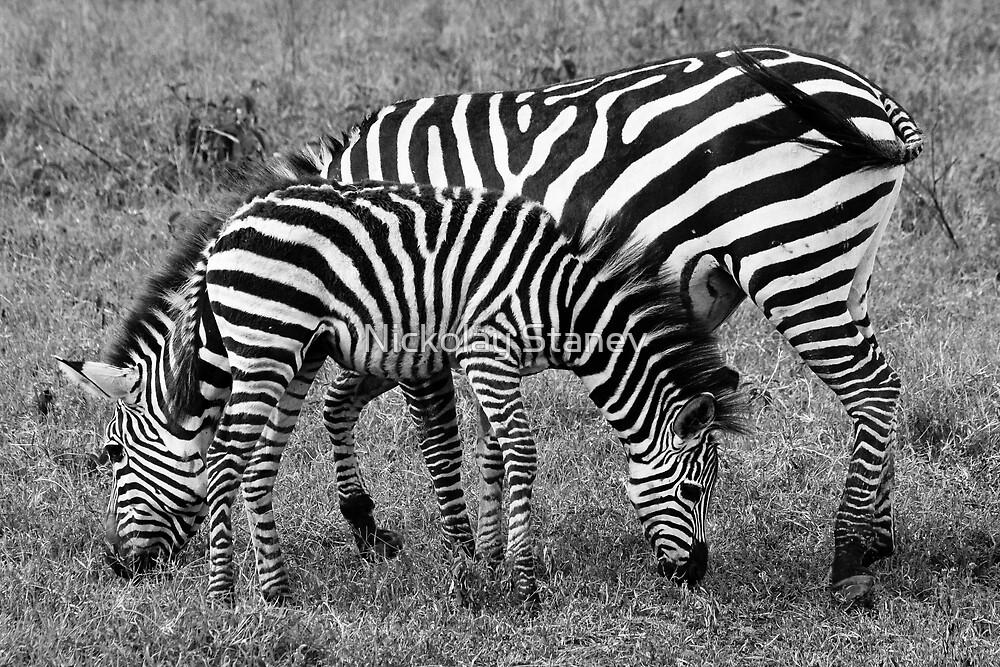 Stripes by Nickolay Stanev