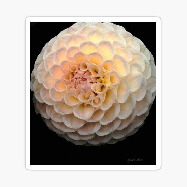 Blush Dahlia Ball Sticker