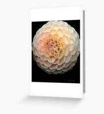 Blush Dahlia Ball Greeting Card