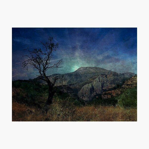Darkness, death tree Photographic Print