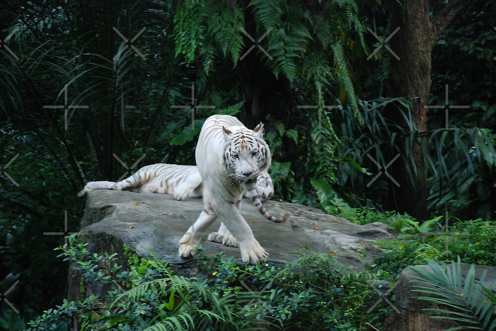 White Tiger by Michelle *
