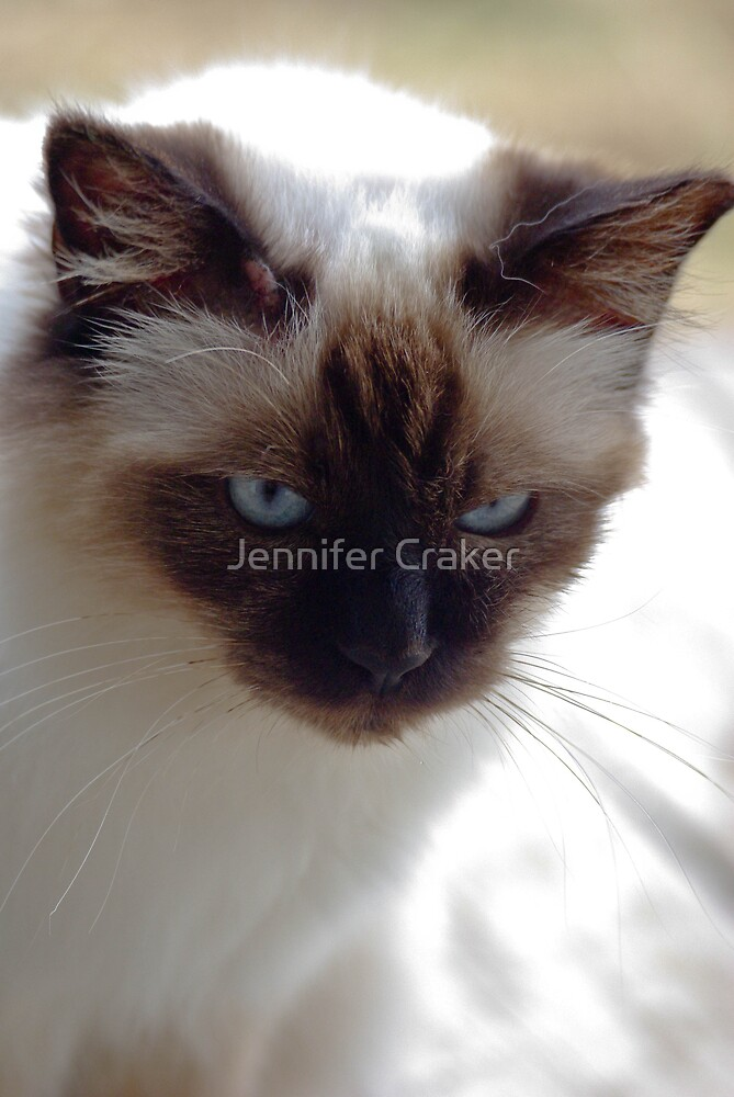 Cookie in deep thought by Jennifer Craker