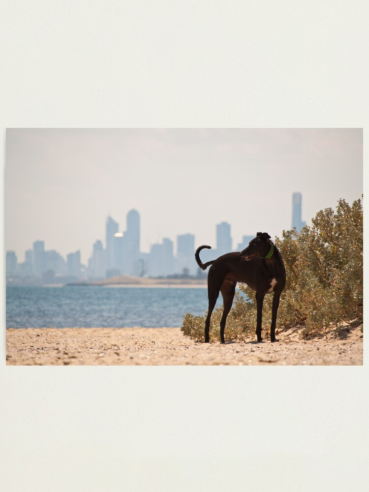 Alternate view of A Day at the Beach Photographic Print
