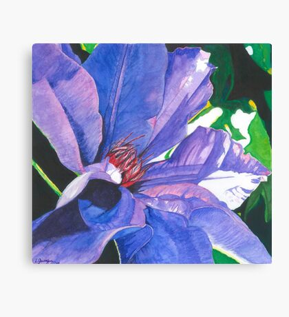 Big Blue Clematis Canvas Print