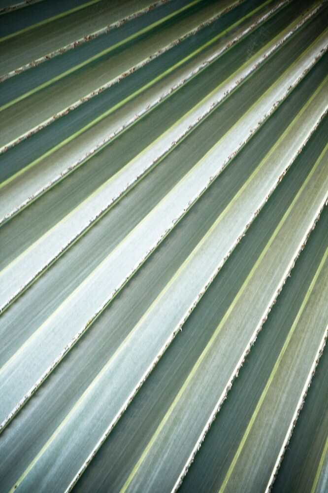 Palm leaves #2 by Amber Parsons
