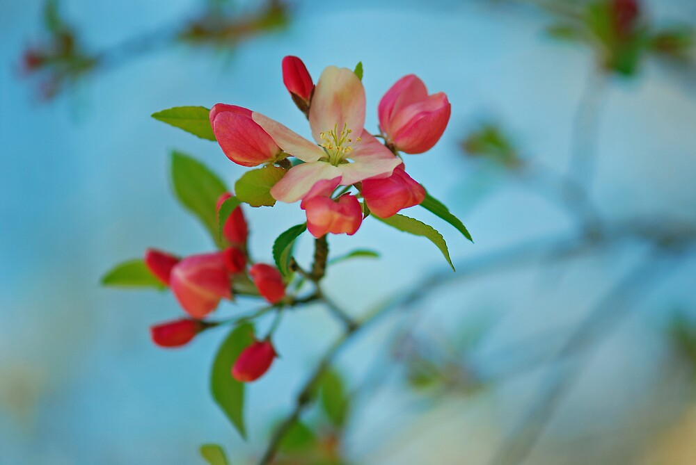 Blossom by Mary Canning