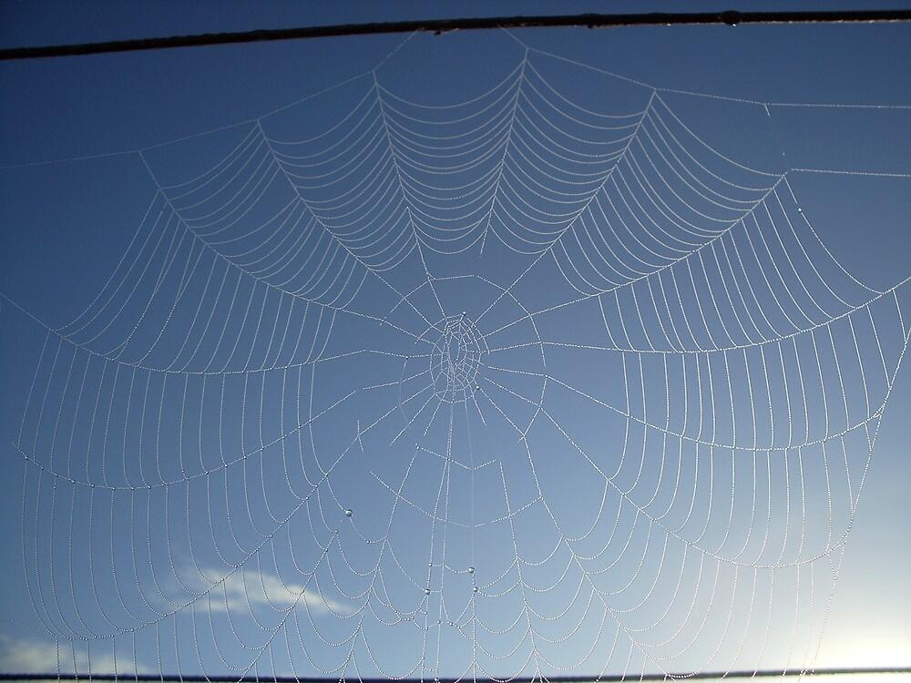 Arachnid Sky untouched by Virgoan