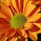 Pretty Petals by Terri~Lynn Bealle