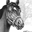 Stare of the Stallion - Sound Reason (Can) by Patricia Howitt