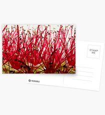 Pohutukawa Flower Postcards