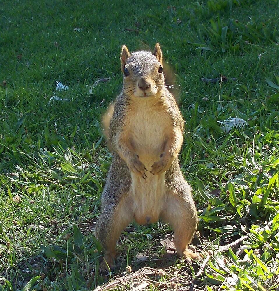 Hello squirrel ! by daffodil
