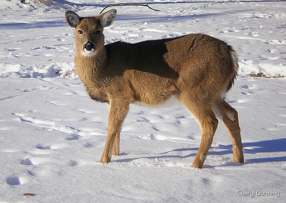 posing deer by Cheryl Dunning