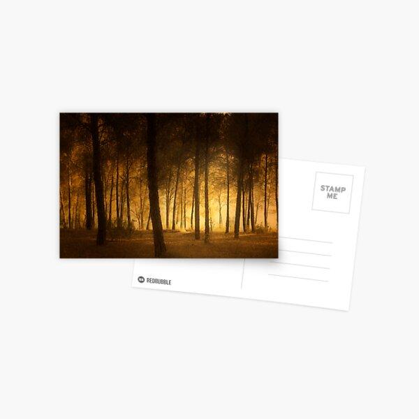 through the trees Postcard
