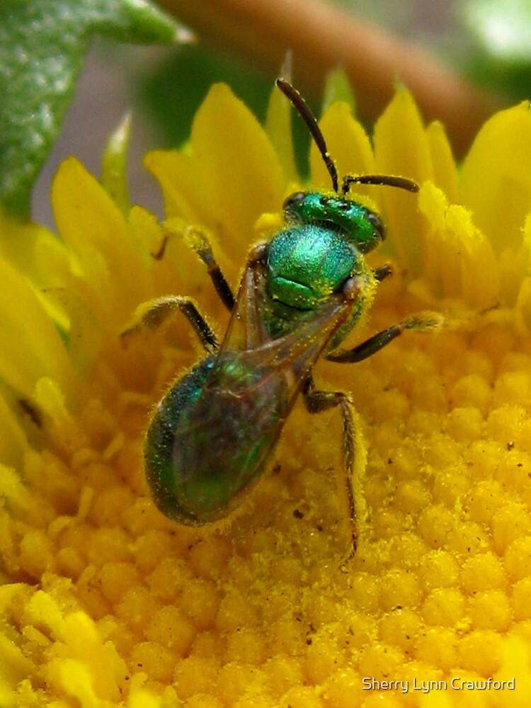 Green Bee by Sherry Lynn Crawford
