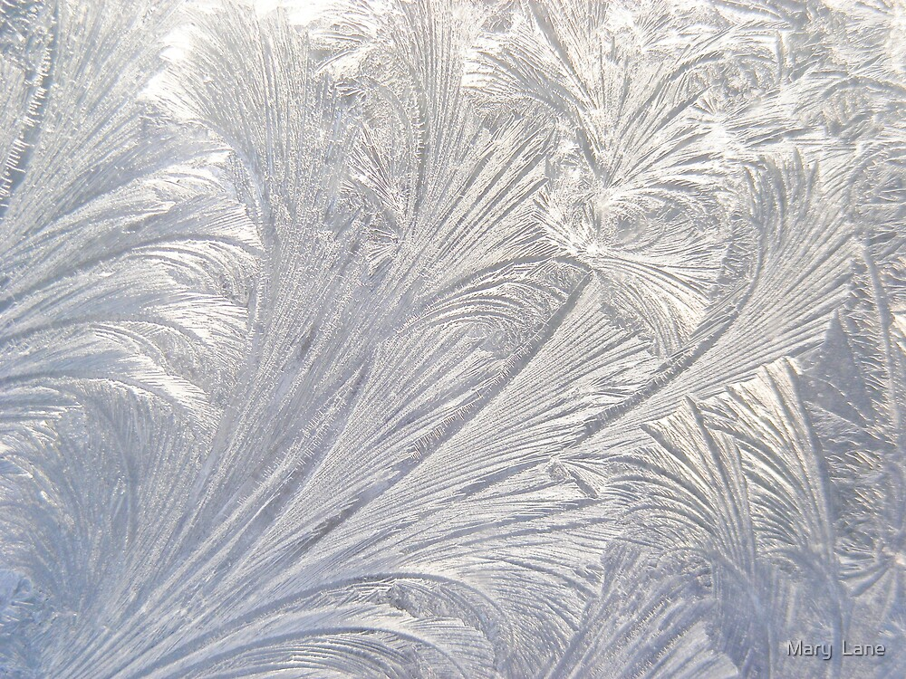 Etched in Ice by Mary  Lane