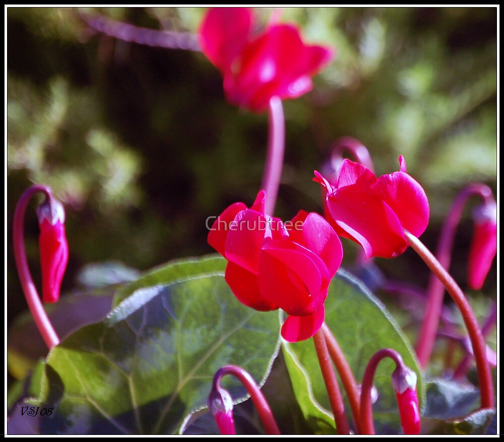 Spring Blossoms by Cherubtree