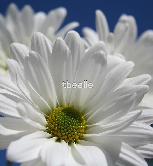 ~Beautiful Blooms~ by Terri~Lynn Bealle