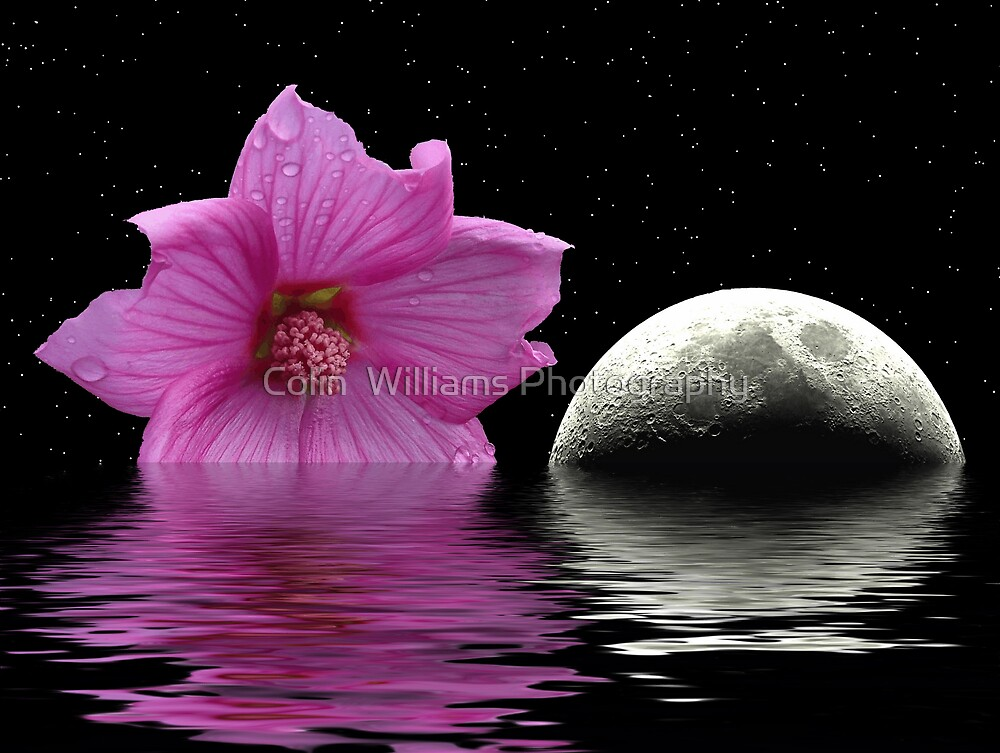 Flower and Moon by Colin  Williams Photography