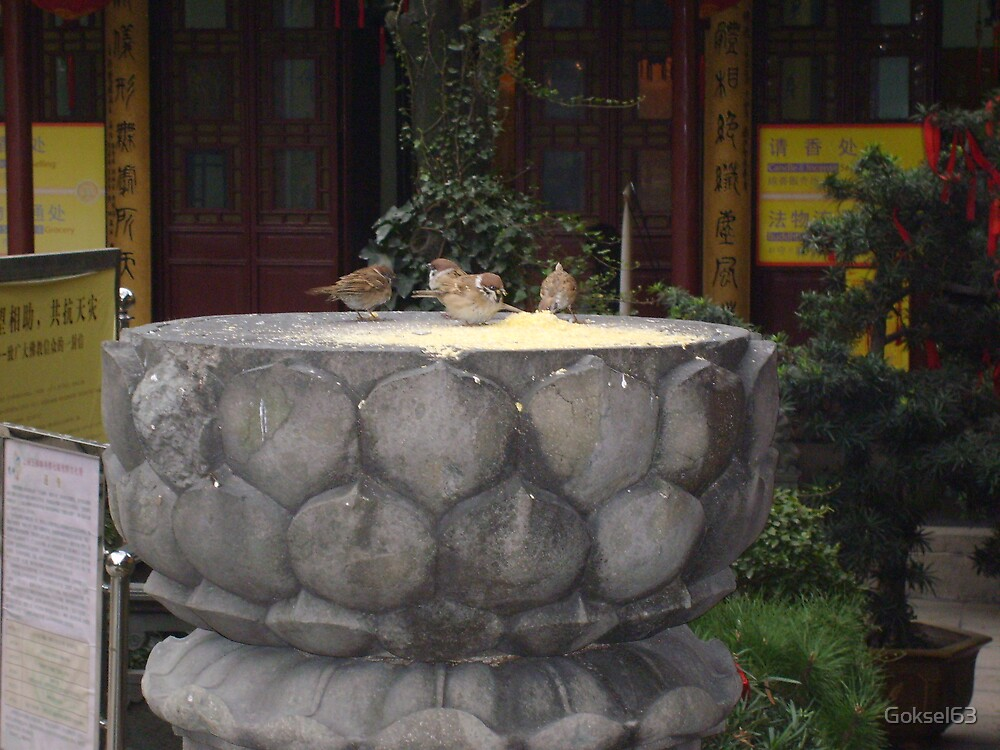 Sparrows at Jade Temple, Shanghai by Goksel63