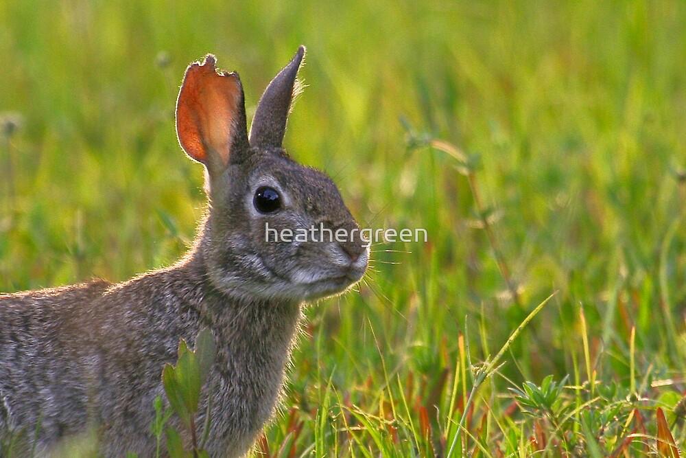 Wild Rabbit by heathergreen