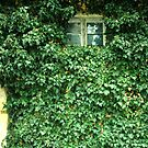 Window of Ivy by ronibgood