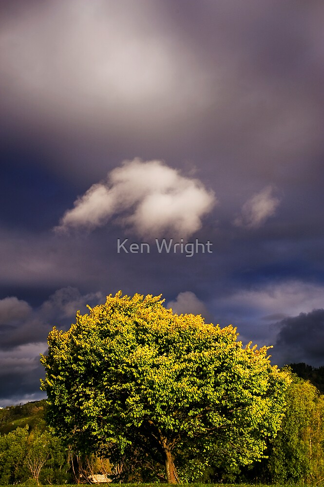 Kerrygold by Ken Wright