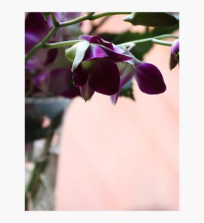 Singapore Orchids Photographic Print