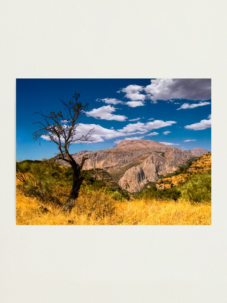 Alternate view of Death tree Photographic Print