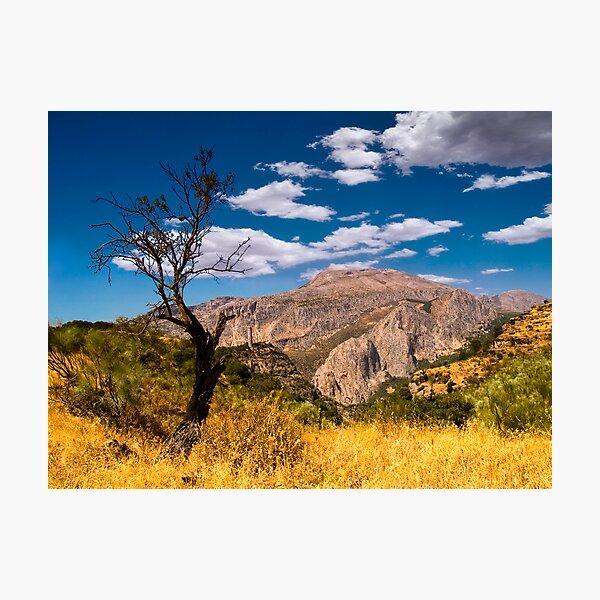 Death tree Photographic Print