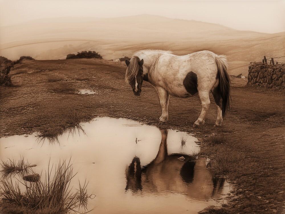 Dartmoor Pony by BlueRoom