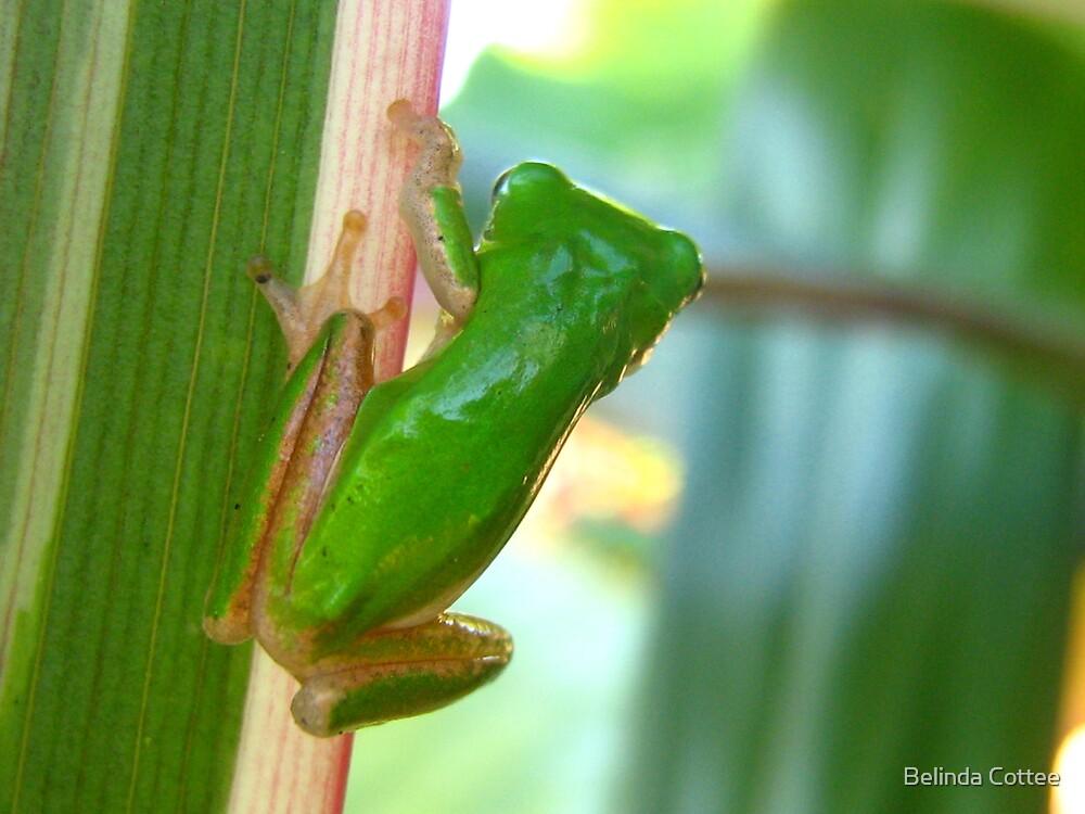 frog watch by Belinda Cottee