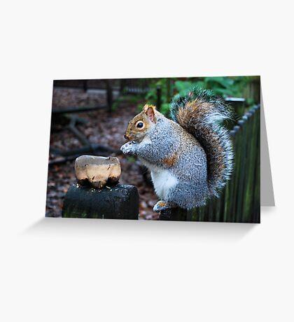 Feeding Greeting Card