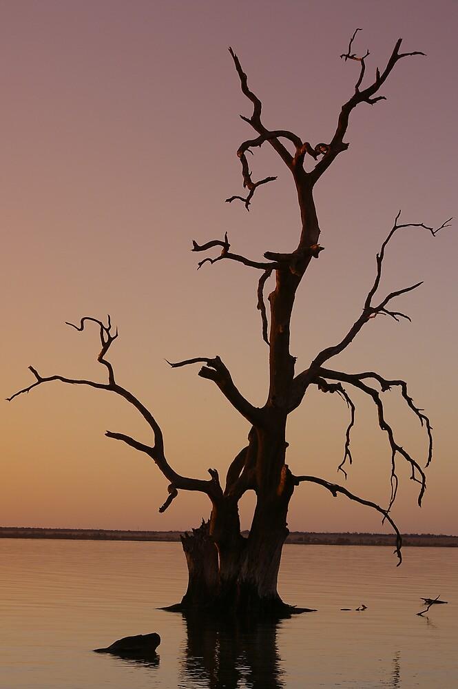 Lake Bonney Tree by Greg Eyre