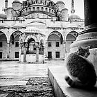 Cat of the Blue Mosque, Istanbul by Lidia D'Opera